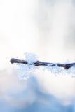 Παγωμένος κλάδος το χειμώνα, στις ακτίνες ήλιων υποβάθρου Στοκ Φωτογραφίες