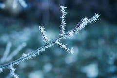 Παγωμένος κλάδος χειμερινών δέντρων Στοκ εικόνα με δικαίωμα ελεύθερης χρήσης