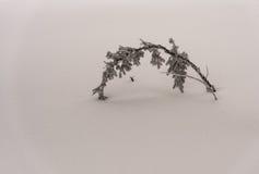 Παγωμένος κλάδος χιονιού Στοκ φωτογραφία με δικαίωμα ελεύθερης χρήσης