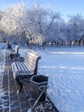Παγωμένος πάγκος έναν χειμώνα πάρκων πόλεων Στοκ Εικόνα