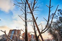 Παγωμένος πέρα από τα δέντρα στο υπόβαθρο μιας χειμερινής πόλης Στοκ Εικόνες