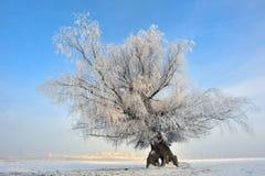 παγωμένος πεδίο χειμώνας &d Στοκ Φωτογραφία