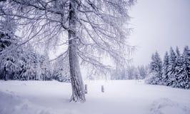 παγωμένος πεδίο χειμώνας &d Στοκ Εικόνες