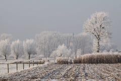 παγωμένος του χωριού χειμώνας δέντρων Στοκ Εικόνες