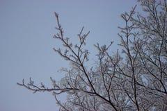Παγωμένος χειμώνας δέντρων Στοκ φωτογραφίες με δικαίωμα ελεύθερης χρήσης