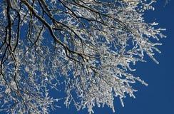 παγωμένος χειμώνας δέντρων Στοκ Εικόνα
