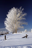 παγωμένος χειμώνας δέντρων Στοκ εικόνα με δικαίωμα ελεύθερης χρήσης