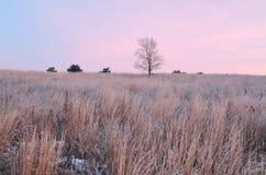 παγωμένος χειμώνας λιβα&delta Στοκ εικόνα με δικαίωμα ελεύθερης χρήσης