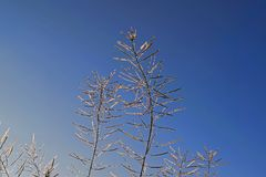 παγωμένος χειμώνας φυτών Στοκ εικόνες με δικαίωμα ελεύθερης χρήσης