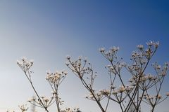 παγωμένος χειμώνας φυτών Στοκ εικόνα με δικαίωμα ελεύθερης χρήσης