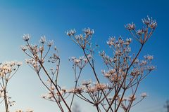 παγωμένος χειμώνας φυτών Στοκ φωτογραφία με δικαίωμα ελεύθερης χρήσης