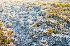 παγωμένος χειμώνας χλόης Στοκ Φωτογραφίες