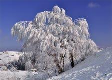 παγωμένος χειμώνας όψης δέν& στοκ εικόνες με δικαίωμα ελεύθερης χρήσης