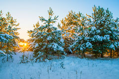 παγωμένος χειμώνας ύδατος ηλιοβασιλέματος τοπίων χλόης Στοκ εικόνες με δικαίωμα ελεύθερης χρήσης