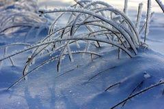 Παγωμένος Στοκ εικόνες με δικαίωμα ελεύθερης χρήσης