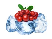 Παγωμένος lingonberries απομονωμένος Στοκ Φωτογραφίες
