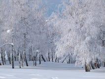 Παγωμένο άλσος marge Στοκ Φωτογραφία