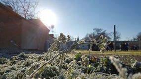 Παγωμένο άνθος Στοκ εικόνα με δικαίωμα ελεύθερης χρήσης