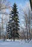 Παγωμένο δάσος Στοκ φωτογραφίες με δικαίωμα ελεύθερης χρήσης