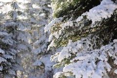 Παγωμένο δάσος Στοκ Φωτογραφίες