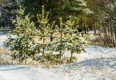 Παγωμένο δάσος Στοκ εικόνα με δικαίωμα ελεύθερης χρήσης