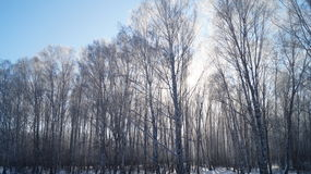 Παγωμένο δάσος Στοκ φωτογραφία με δικαίωμα ελεύθερης χρήσης