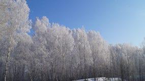 Παγωμένο δάσος Στοκ εικόνες με δικαίωμα ελεύθερης χρήσης
