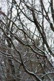 Παγωμένο δάσος Στοκ Φωτογραφία