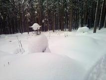 Παγωμένο δάσος στοκ εικόνες