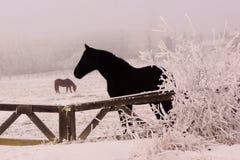 Παγωμένο άλογο το χειμώνα Στοκ Εικόνες