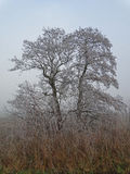 Παγωμένο δέντρο στο χειμερινό τοπίο Στοκ Φωτογραφίες