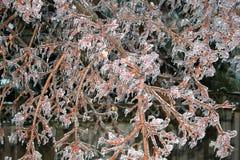 παγωμένο δέντρο Στοκ φωτογραφία με δικαίωμα ελεύθερης χρήσης
