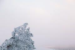 παγωμένο δέντρο Στοκ εικόνες με δικαίωμα ελεύθερης χρήσης