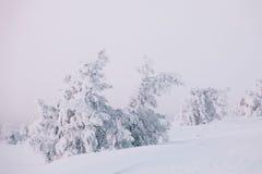 παγωμένο δέντρο Στοκ εικόνα με δικαίωμα ελεύθερης χρήσης