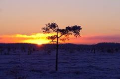 Παγωμένο έλος Στοκ φωτογραφία με δικαίωμα ελεύθερης χρήσης