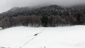 Παγωμένο δάσος στο βουνό απόθεμα βίντεο