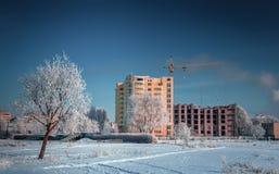 Παγωμένο ηλιόλουστο πρωί Στοκ Φωτογραφία