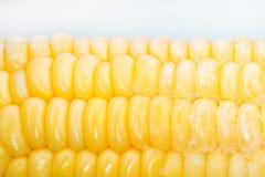 Παγωμένο καλαμπόκι Μακροεντολή closeup Άσπρη ανασκόπηση Στοκ Εικόνες