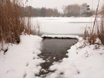 Παγωμένο νερό καλάμων δέντρων χειμερινού χιονιού επιφάνειας λιμνών Στοκ Εικόνες