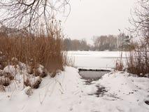 Παγωμένο νερό καλάμων δέντρων χειμερινού χιονιού επιφάνειας λιμνών Στοκ Φωτογραφία