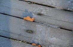 Παγωμένο ξύλο με τα φύλλα στοκ φωτογραφίες με δικαίωμα ελεύθερης χρήσης