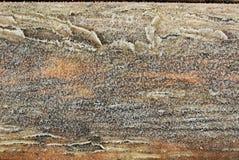 Παγωμένο ξύλο Στοκ φωτογραφία με δικαίωμα ελεύθερης χρήσης