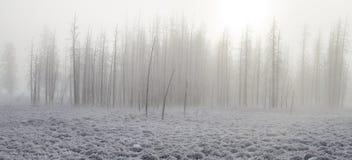 Παγωμένο ομιχλώδες πετρώνω δάσος Στοκ φωτογραφία με δικαίωμα ελεύθερης χρήσης