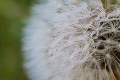 Παγωμένο λουλούδι επιθυμίας στοκ φωτογραφία με δικαίωμα ελεύθερης χρήσης