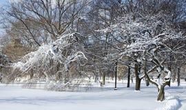 παγωμένο πάρκο Στοκ Φωτογραφίες
