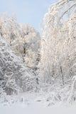 Παγωμένο παραμύθι Στοκ φωτογραφία με δικαίωμα ελεύθερης χρήσης