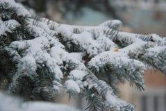 Παγωμένο πεύκο brunch Στοκ Φωτογραφία