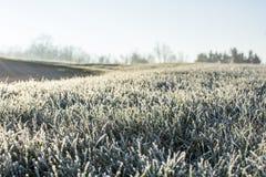 Παγωμένο πρωί αρχές Δεκεμβρίου Στοκ Εικόνα
