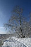Παγωμένο πρωί στη λίμνη, την ομίχλη και τον παγετό στη χλόη Στοκ Εικόνες