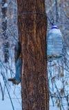 παγωμένο πρωί Στοκ Φωτογραφία